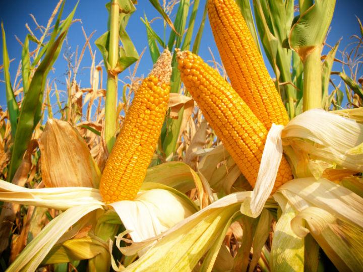 De que lengua indigena proviene la palabra maiz for De que lengua proviene la palabra jardin