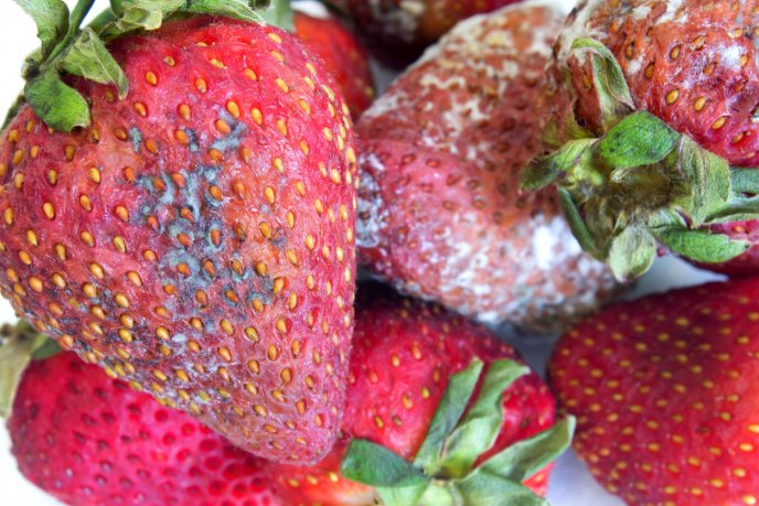 Como desinfectar las fresas de forma natural