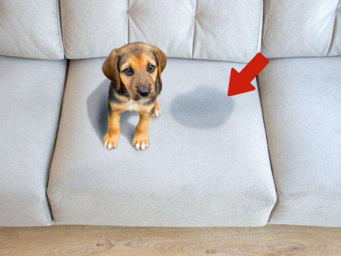 El Remedio Casero Que Evitará Que Perros Y Gatos Se Orinen En Tu Casa