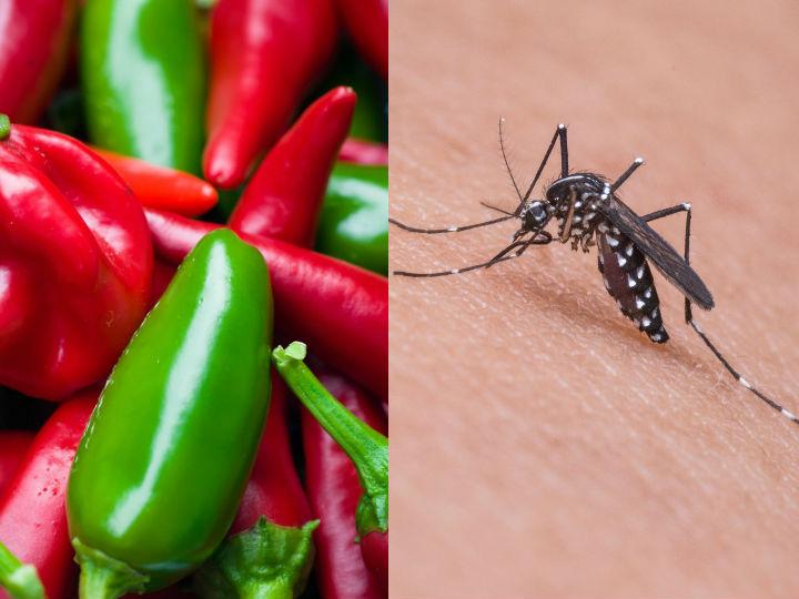Que Comer Para No Atraer Mosquitos