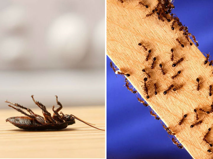 Remedios para eliminar insectos de la casa definitivamente - Eliminar insectos en casa ...