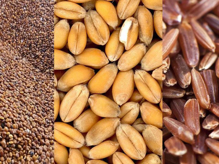 6 Semillas Que Debes Comer Para Bajar De Peso