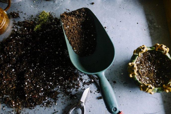 truco para cultivar canela