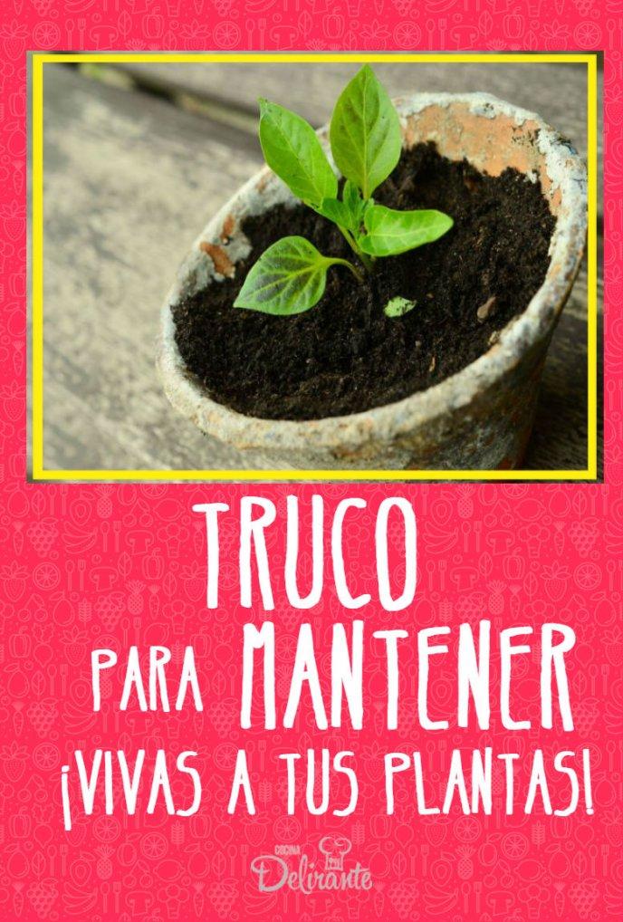 como mantener vivas las plantas