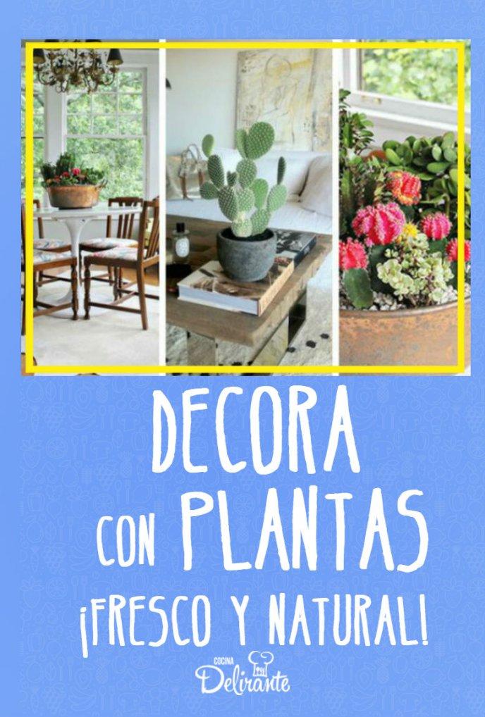 como puedo decorar con plantas la casa