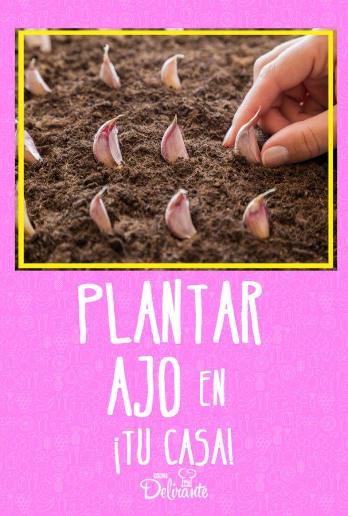 como puedo plantar ajo