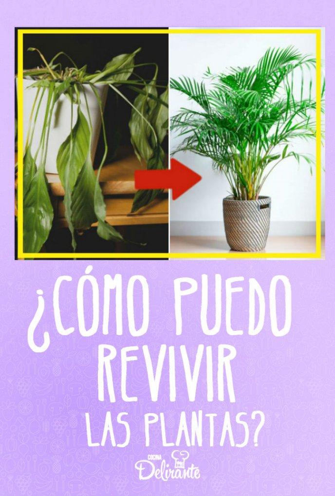 como puedo revivir una planta