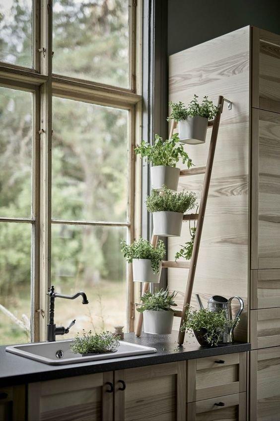 Decoraciones Con Plantas Para Interiores