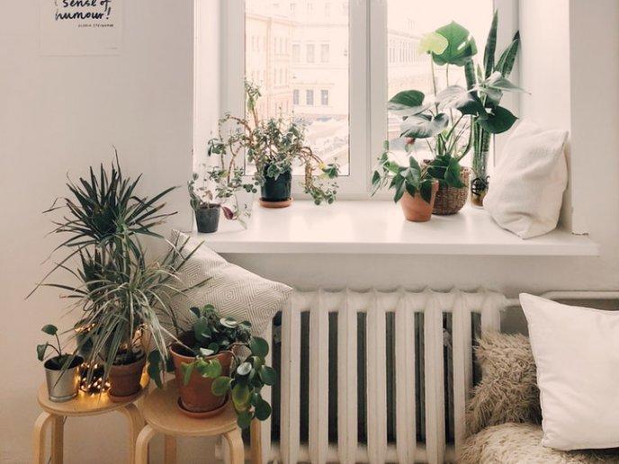 foto-plantas-decorativas