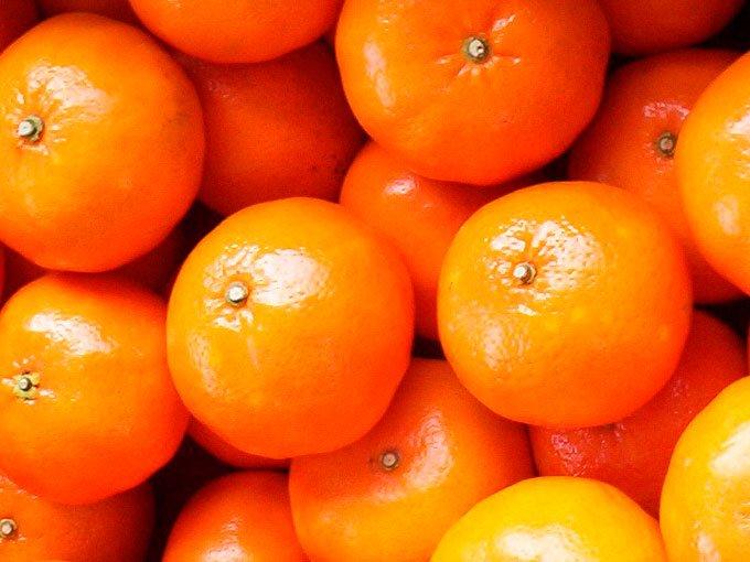 como puedo cultivar mandarinas facilmente