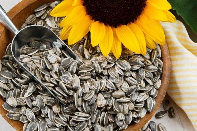cuantas semillas de girasol debo comer al dia