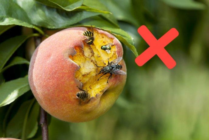 Este Truco Logrará Acabar Con Las Moscas De Tu Fruta