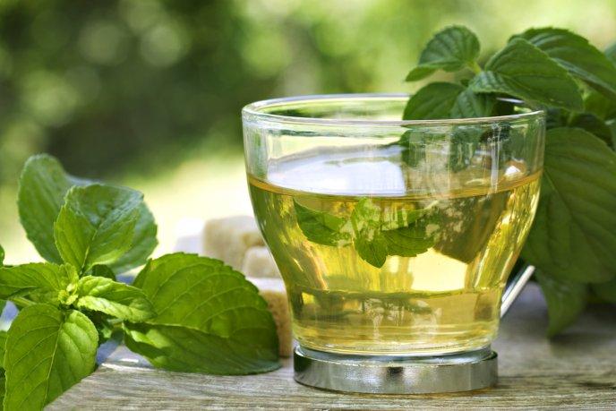 Esta bebida de menta logrará desinflamarte y quemar la grasita de tu abdomen