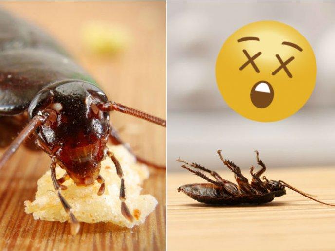 Como Eliminar Cucarachas De Mi Casa Facil