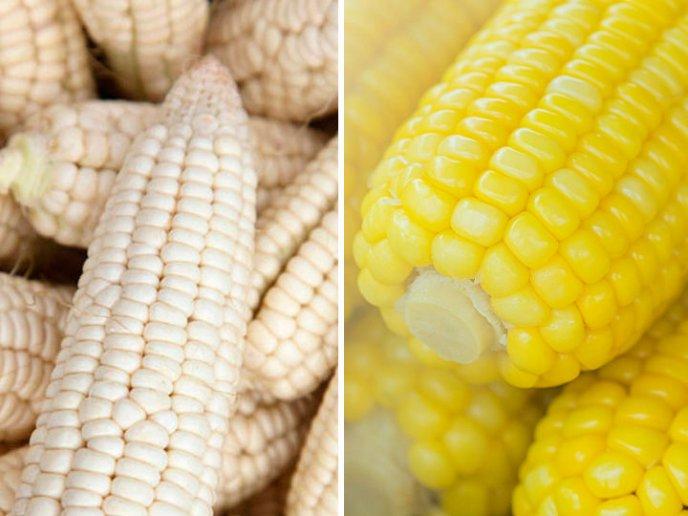 Diferencias Entre Maiz Amarillo Y Blanco