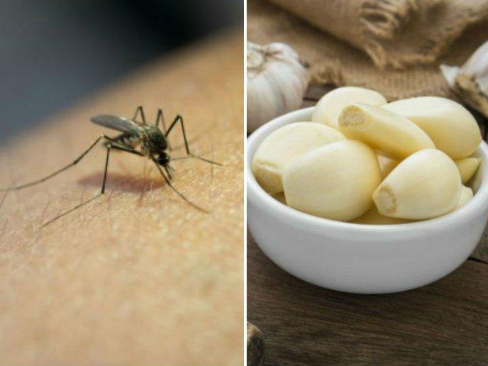 Remedios Naturales Para Alejar Mosquitos