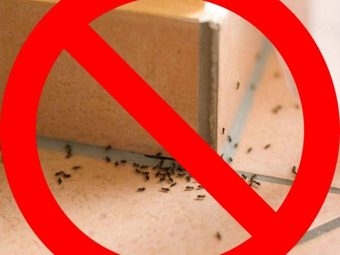 Elimina a todos los insectos de tu casa con este truco - Eliminar insectos en casa ...