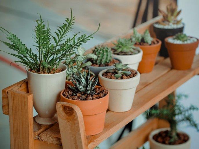 que-plantas-decorativas-no-necesitan-muchos-cuidados