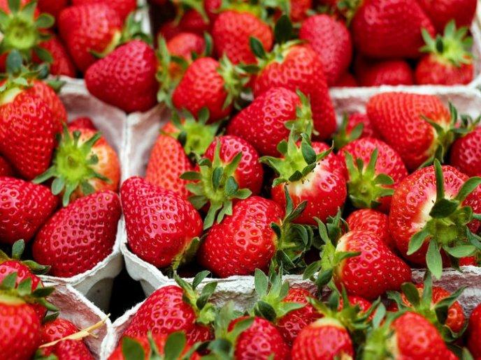 fresa para el colesterol