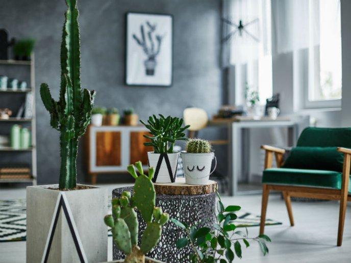 C mo decorar la casa con suculentas f cil y r pido - Plante de salon ...