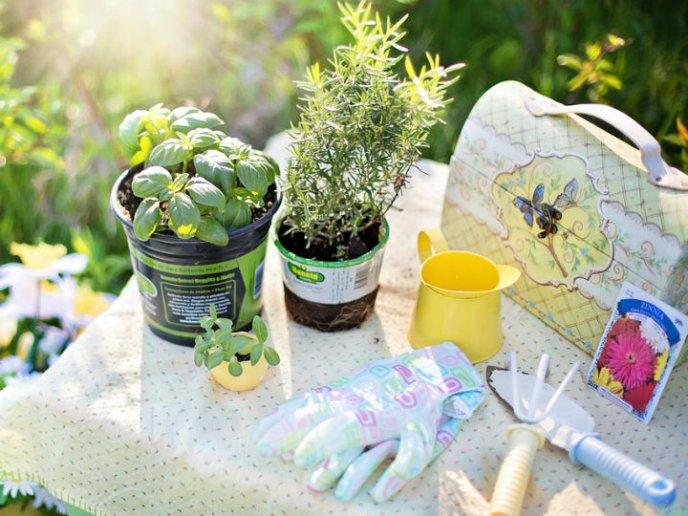 dice estudio que la jardinería tiene beneficios a la salud