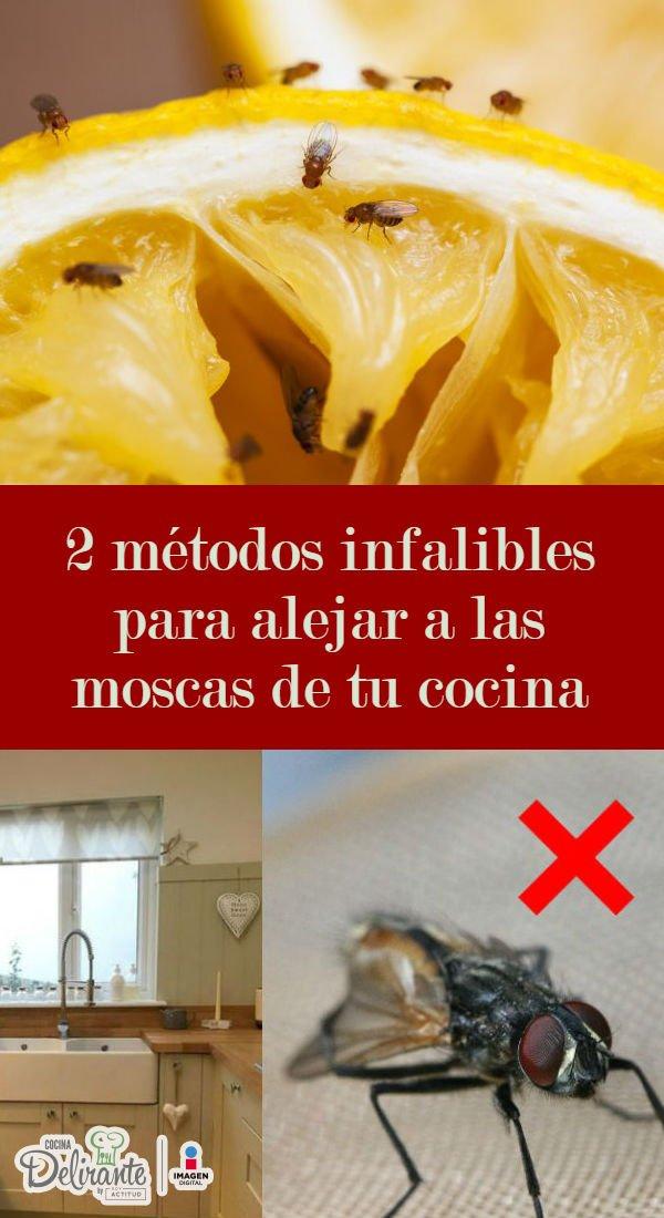 2 Métodos Infalibles Para Alejar A Las Moscas De Tu Cocina