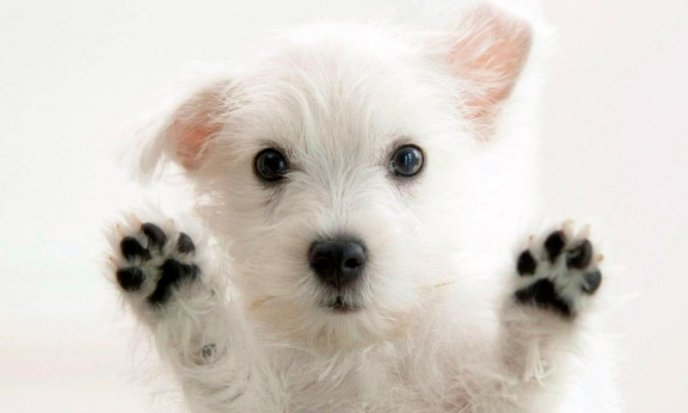 baño en seco para perros bicarbonato