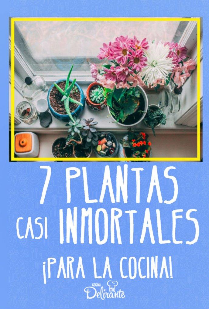 plantas cuidados