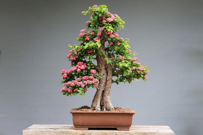 4 Plantas Que Atraen La Mala Suerte Según El Feng Shui
