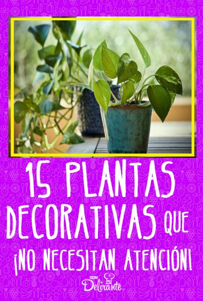 plantas decorativas sin atencion