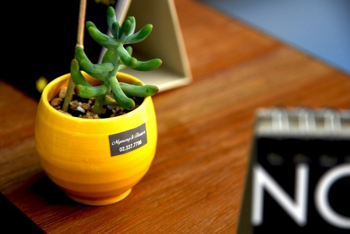plantas inmortales para oficina