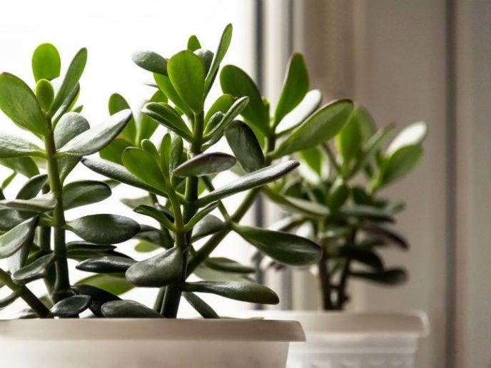 9 Plantas Que Atraen El Dinero Según El Feng Shui Y Puedes Tener En La Cocina