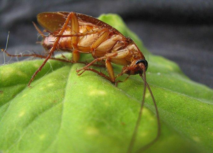 plantas que eliminan cucarachas