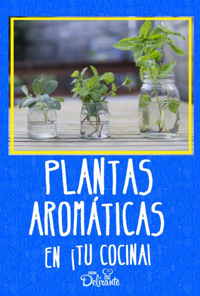 Plantas ar maticas que no deben faltar en tu cocina - Plantas aromaticas en la cocina ...