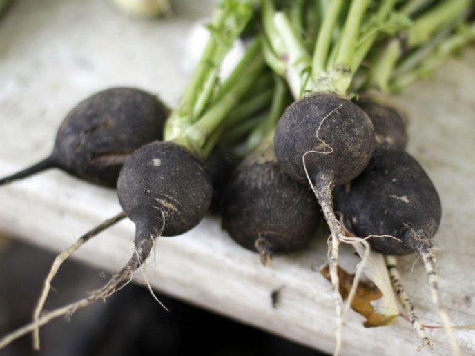 beneficios del rabano negro | CocinaDelirante