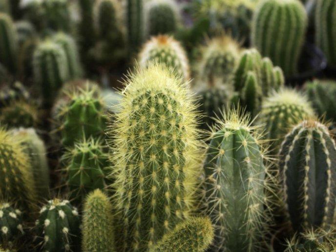 Salva a tu cactus de la muerte, ¡es más fácil de lo que crees!