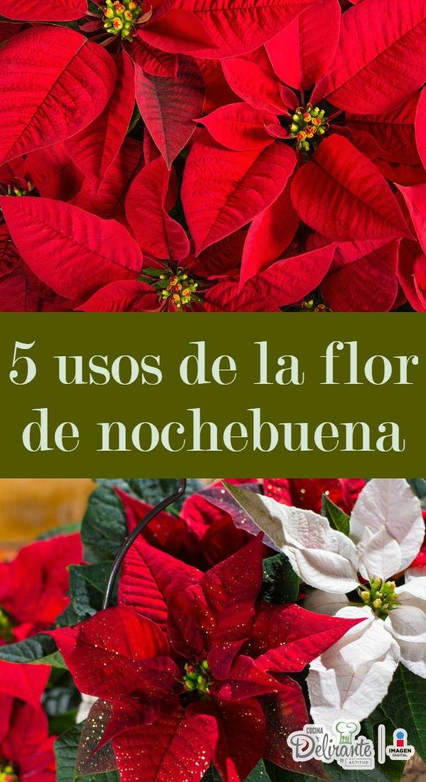 usos tradicionales de la flor de nochebuena | CocinaDelirante